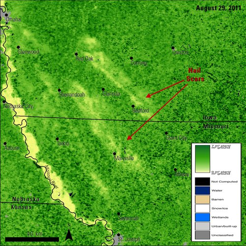 Terra and Aqua Combined MODIS LAI data, acquired on August 29, 2011.